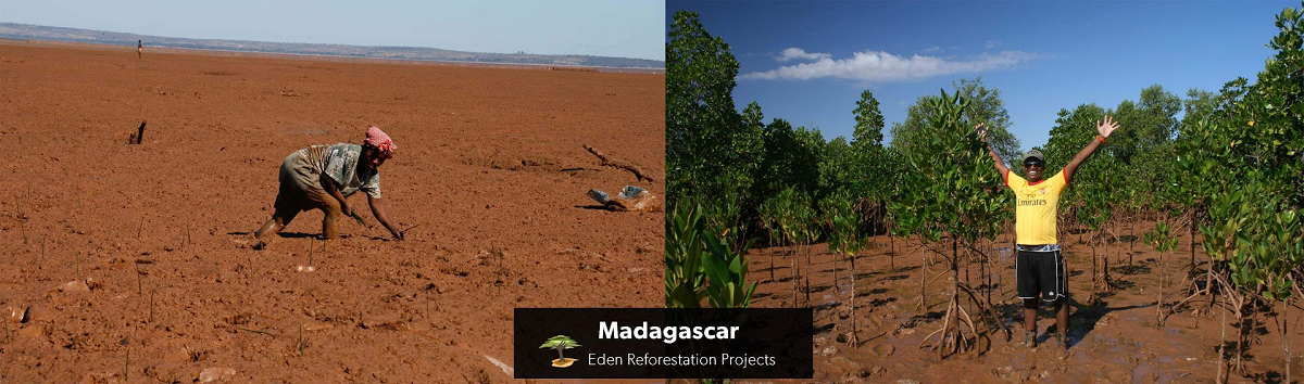 Bomen planten Eden projects madagascar